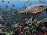 Video about the Living Oceans Foundation