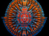 MICROSCOPIC MANDALA: An amazing composite image of numerous desmids (algae) laid on top of each other. Igor Siwanowicz, Third Prize, 2013 Olympus BioScapes Competition. To view more cool microscope images and movies, click on the Olympus BioScapes Gallery