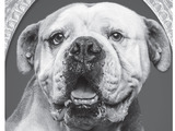 65437-adc-enr-bulldog-today-spa-bw5-sm