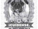 65437-adc-enr-pug-today-spa-bw11-sm