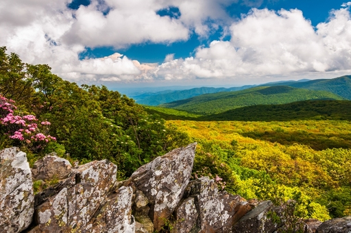 "Shenandoah National Park: Jon Bilous/Shutterstock (These images can only be used in context and conjunction with the promotion of the ""I Heart Parks"" guide and must include proper photo credit.)"