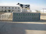 TianNing Dairy Farm