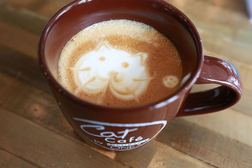 "Baristas at the Cat Café by Purina ONE whip up ""cat'achinos"" in New York. (Photo by Amy Sussman/Invision for Purina ONE/AP Images"
