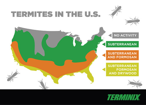 Common termite types found in the United States