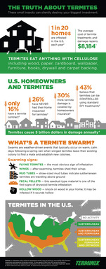 New research highlights facts and misconceptions about termite damage