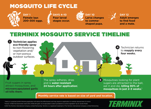 Mosquito Lifecycle