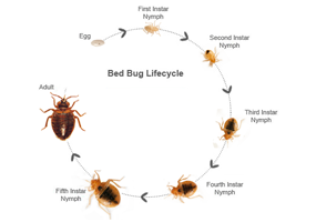 a growing pest problem, bed bugs are creepy, crawly and hard to kill.