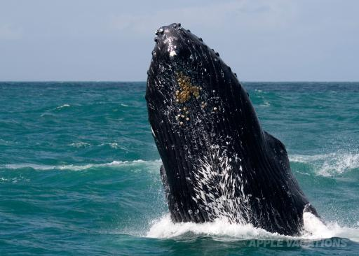 Enjoy whale-watching January 14-March 15.