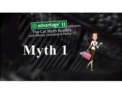 CatMythBusters.com &ndash; Myth 1 video