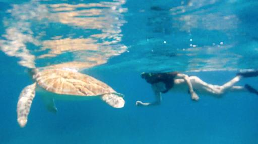 Snorkeling with Sea Turtles in St. Thomas
