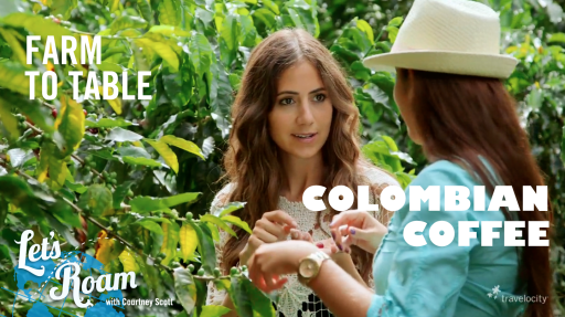 Colombian Coffee from Farm to Table