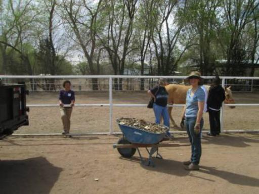 PRN Albuquerque Volunteering at Mandy's Farm