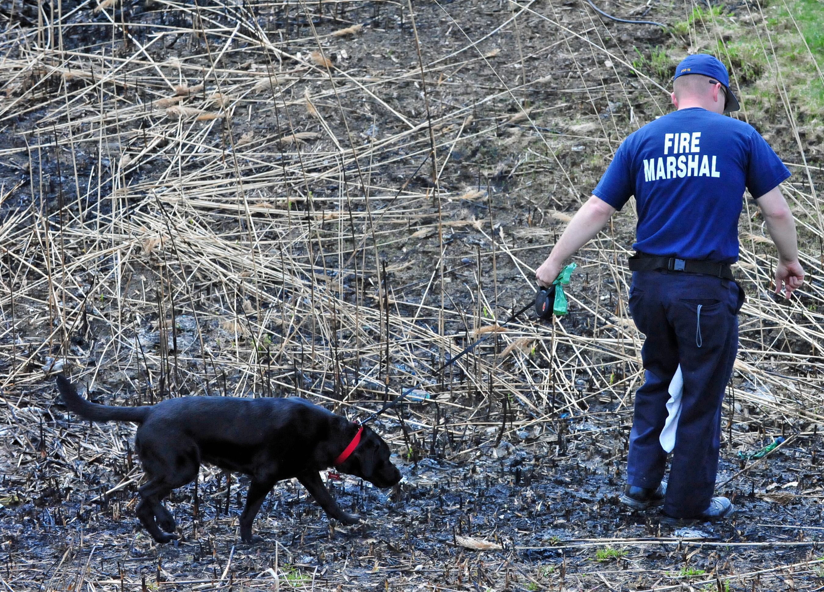 Deputy State Fire Marshal John Galaska and Arson K-9 Tanya with the Delaware State Fire Marshal's Office investigate a burned field for possible evidence of an arson crime.