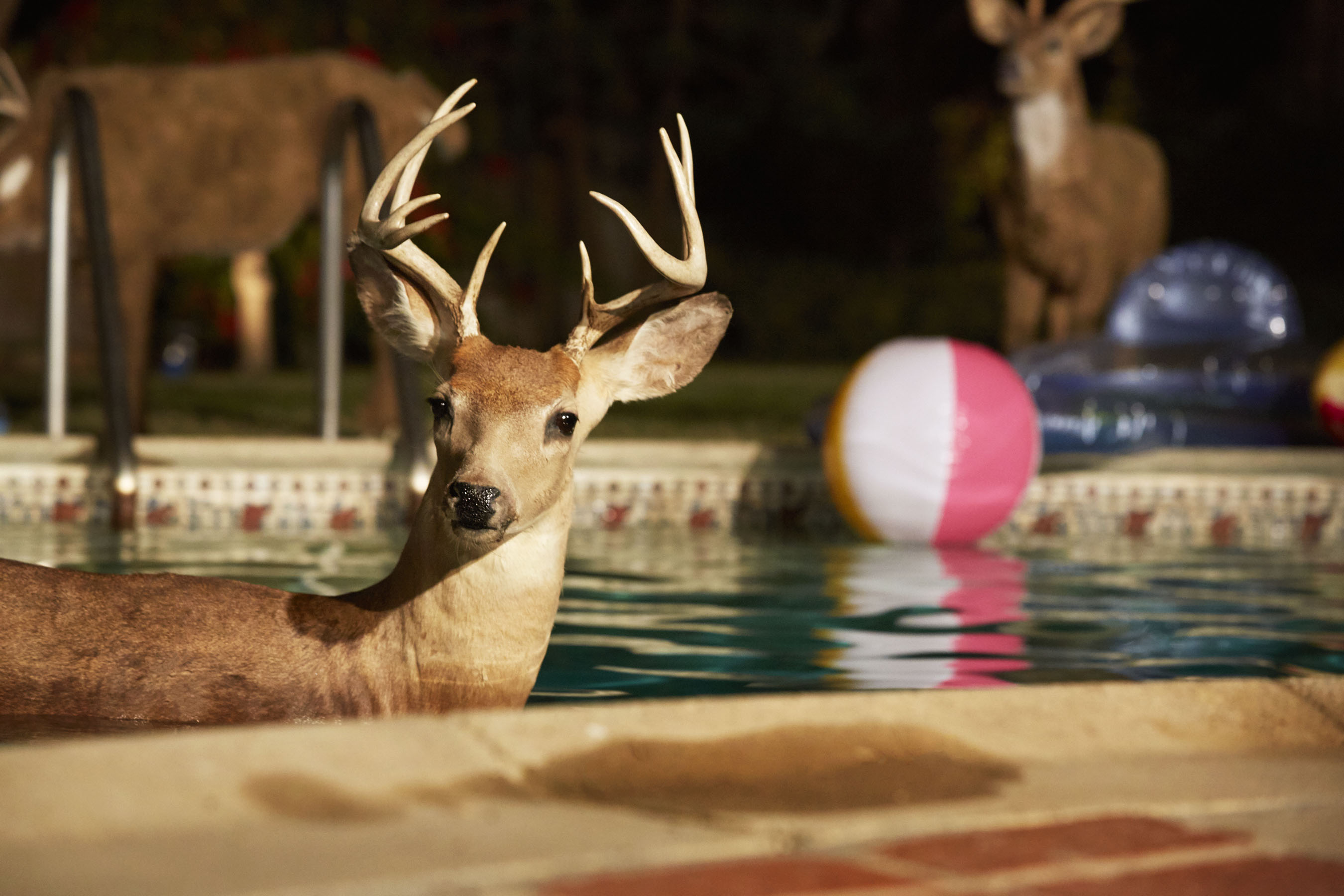 """A scene from the new Farmers Insurance commercial """"Stag Pool Party"""" depicting a real insurance claim covered on October 27th, 2014."""
