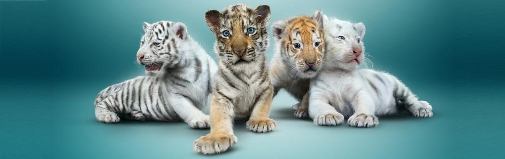 SIEGFRIED & ROY WE...