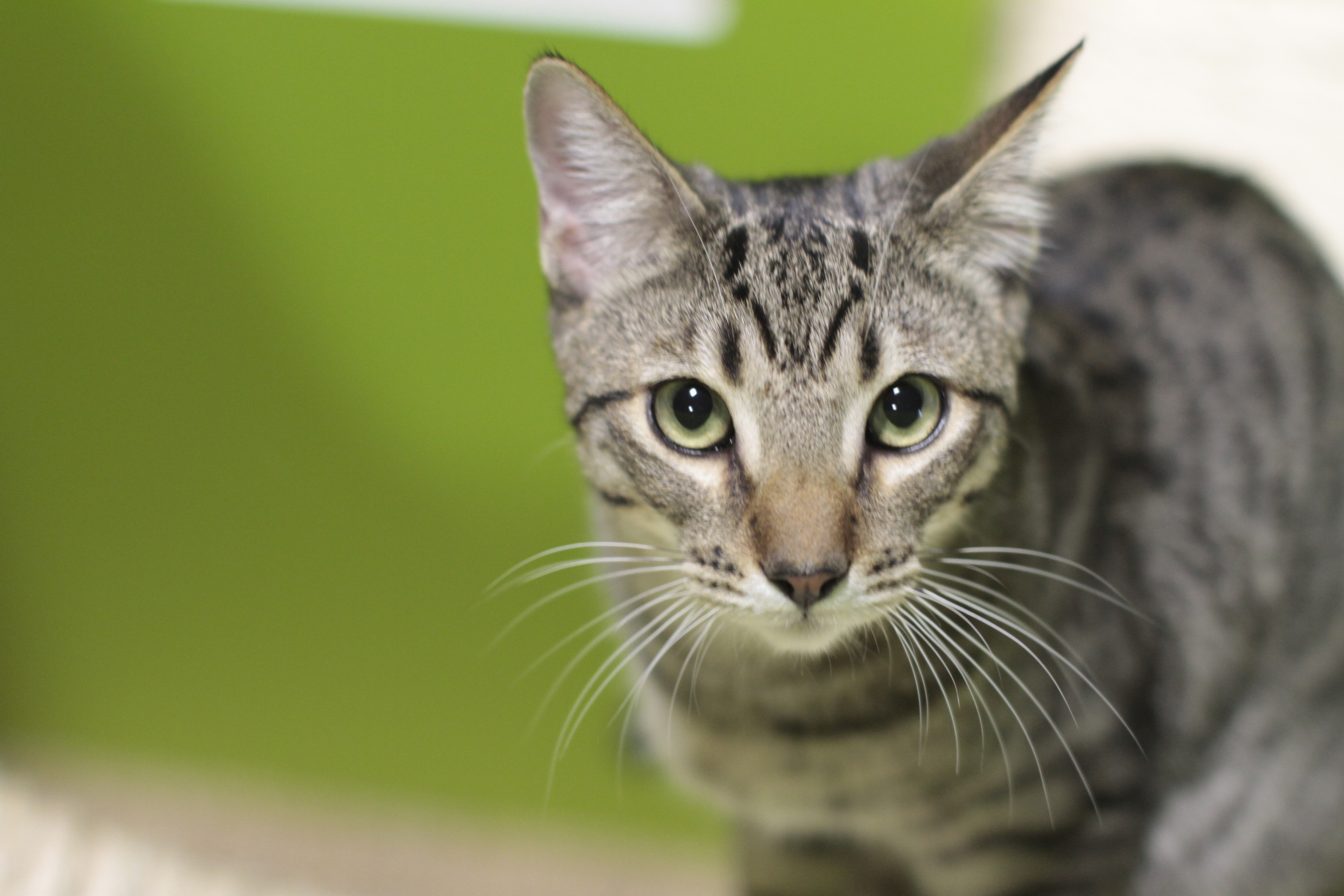 Eighty-eight percent of millennials consider themselves similar to their cat, and nearly the same number say ...