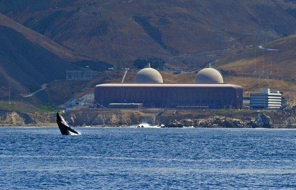 A humpback whale frolics in front of California's Diablo Canyon Power Plant.