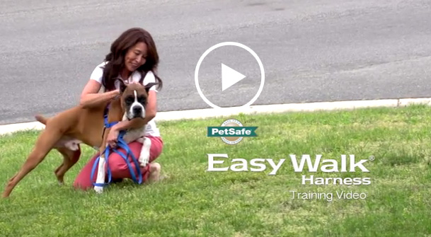 Using the Easy Walk™ Harness with Your Dog this Holiday Season