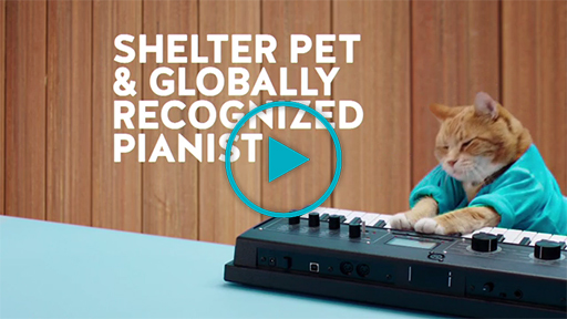 Social Media Superstars Lend Star Power to Homeless Cats and Dogs