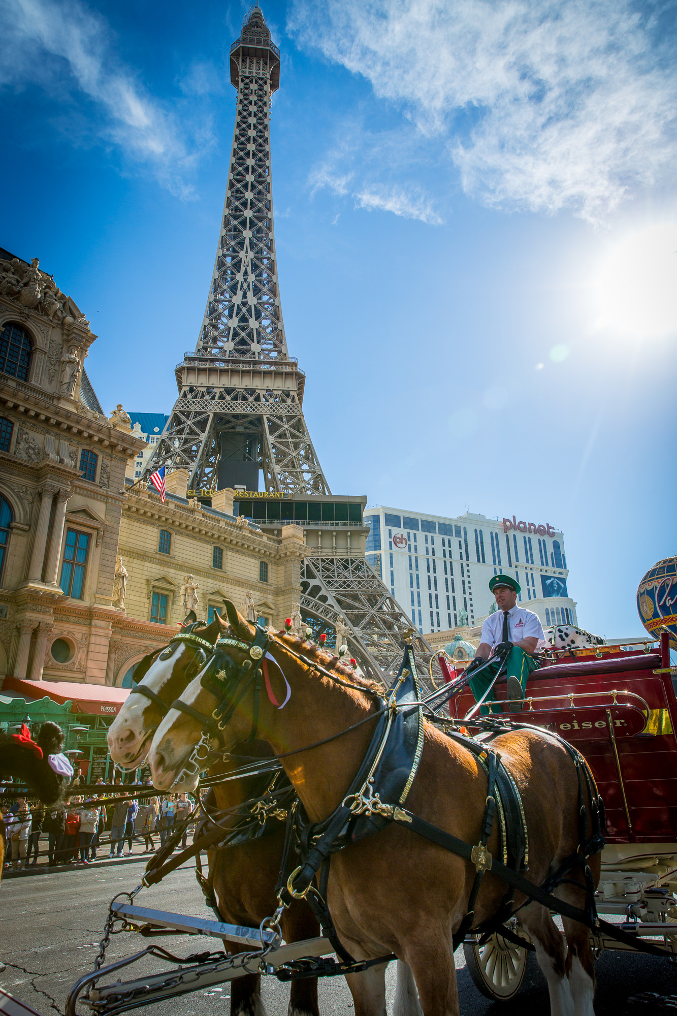 The Budweiser Clydesdales pass by the iconic Paris Las Vegas Eiffel Tower as they trot down the Las Vegas Strip.