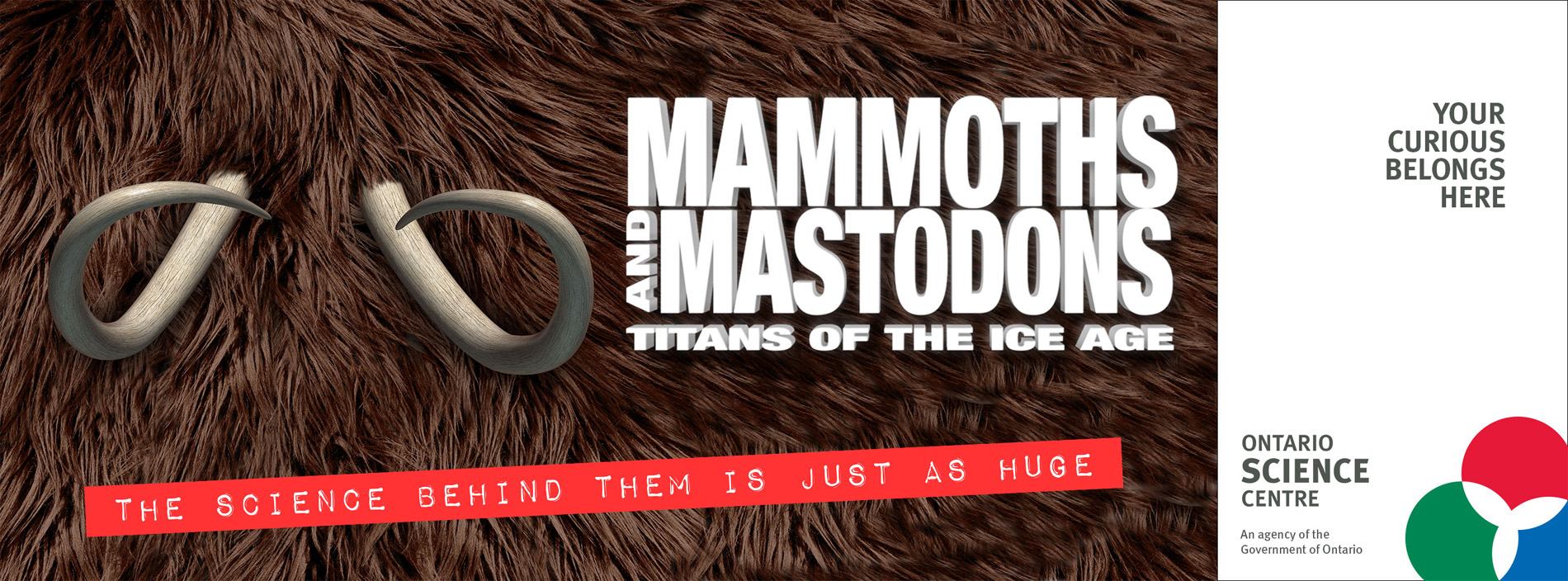 Mammoths and Mastodons Titans of the Ice Age