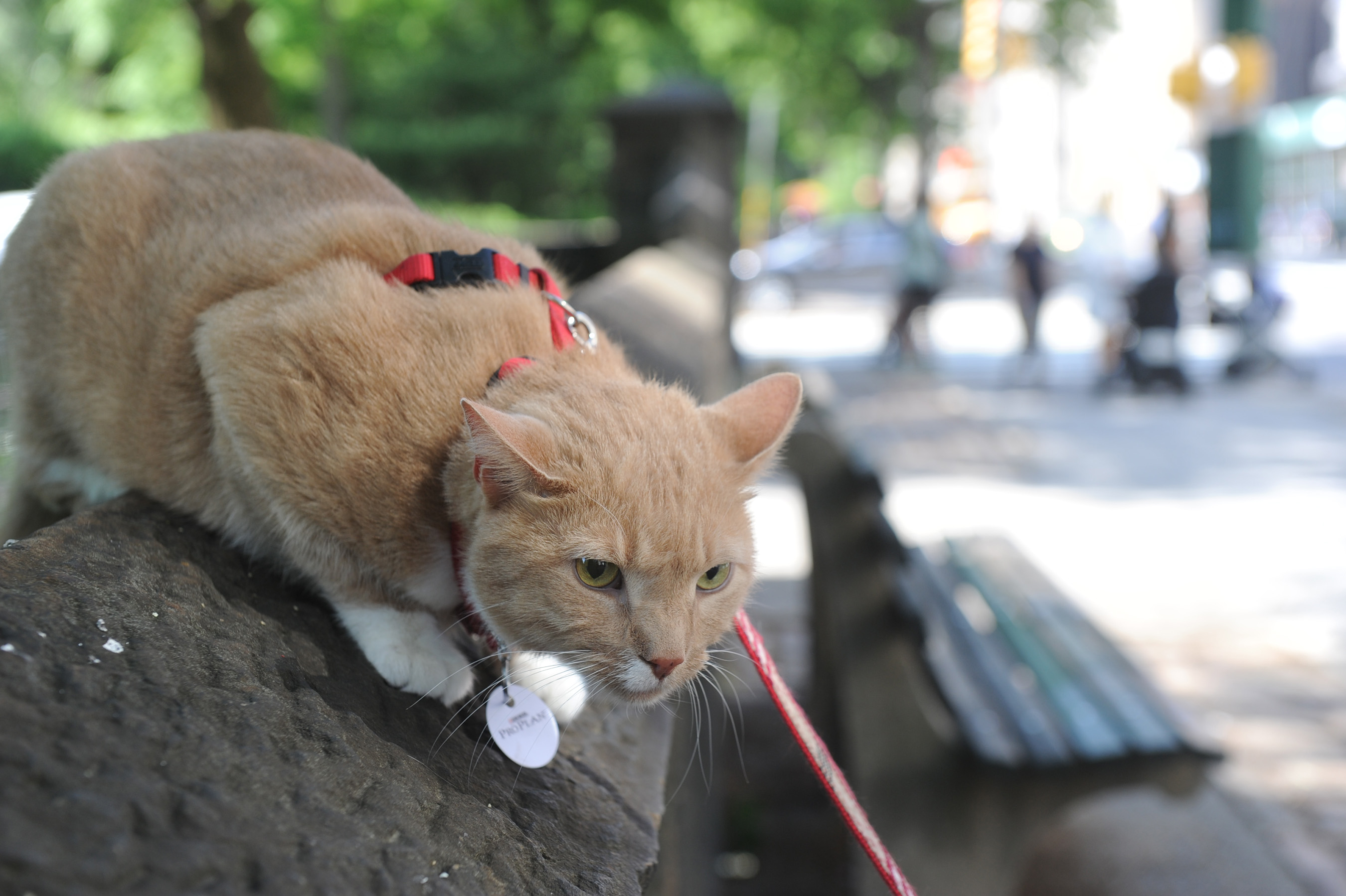 """Purina Pro Plan and Adventure Cats are helping cat owners safely explore the outdoors for National """"Take Your Cat On An Adventure"""" Day on June 15. (Diane Bondareff/AP Images for Purina Pro Plan)"""