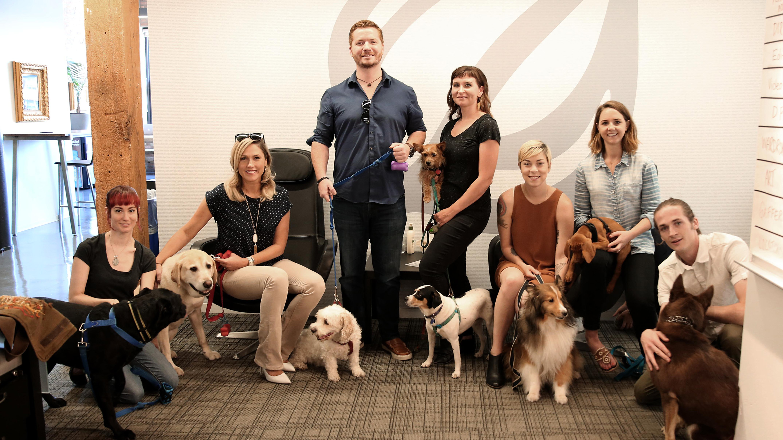 Onion, Inc. partnered with Purina to celebrate #petsatwork by encouraging employees to bring their pet to work in attempt to help break the world record for Most Pets in the Workplace in One Day