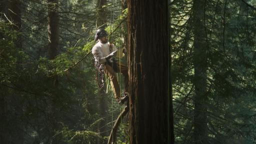 Man climbing on ropes in a huge tree