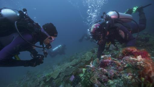 Two men scuba diving on the coral reef.