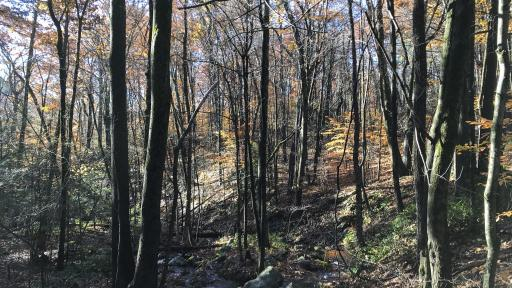 Maple Leaf Foods is investing in a forestry project called the Massachusetts Tri-City Forestry Program, a joint Improved Forest Management project on 17,000 acres of public forestland in central Massachusetts.