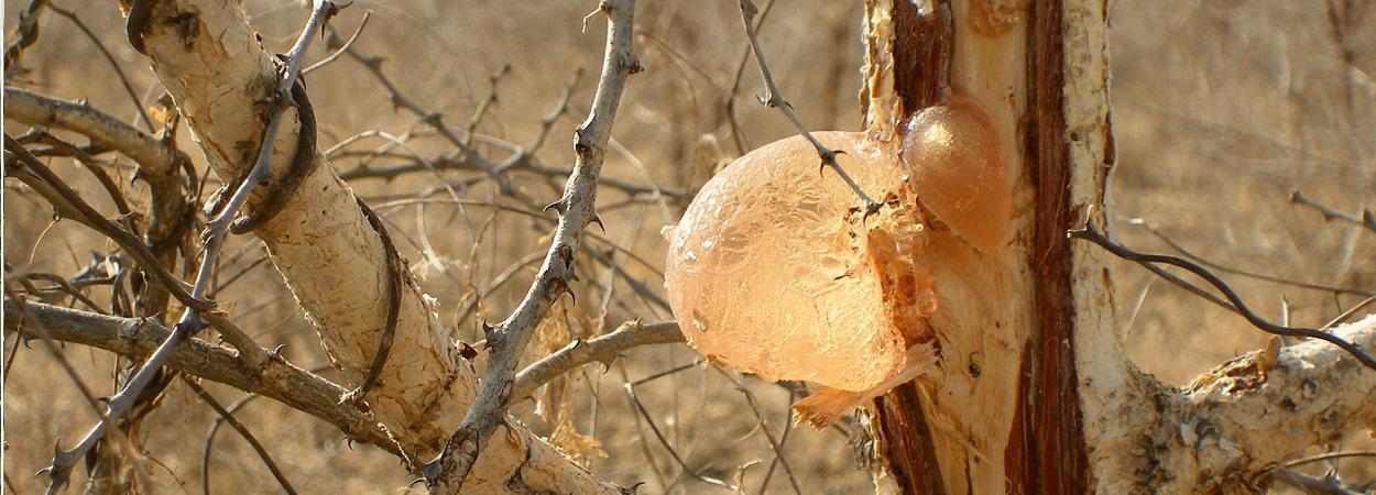 Gum acacia in food