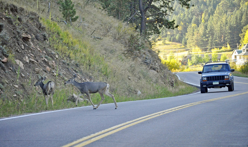 Using its claims data, State Farm Insurance estimates 1.09 million collisions between deer and vehicles occurred in the U.S. between July 1, 2010 and June 30, 2011.
