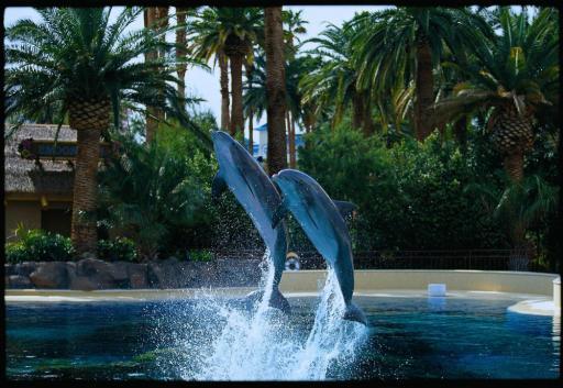 Dolphin habitat at The Mirage