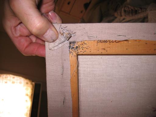 Bed Bug Infested Picture Frame