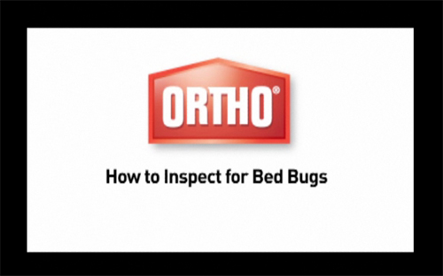 Inspect for Bed Bugs