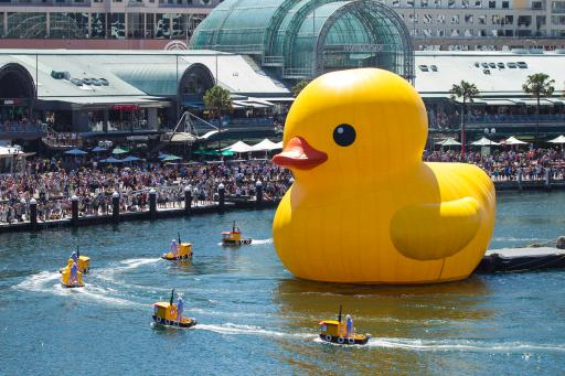 Rubber Duck, Sydney Festival. January 5.