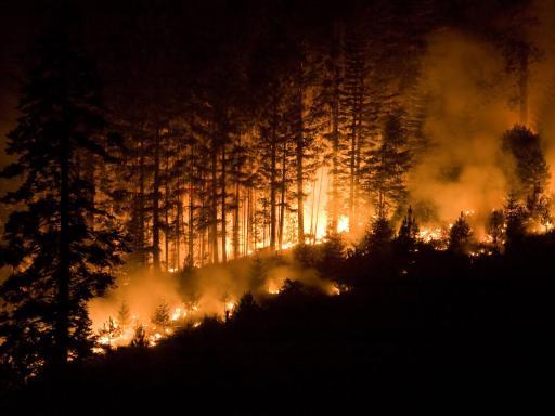 Wildfire Blazing through Trees