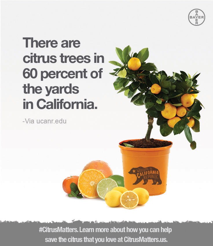 California Residents Called on to Help Save California Citrus