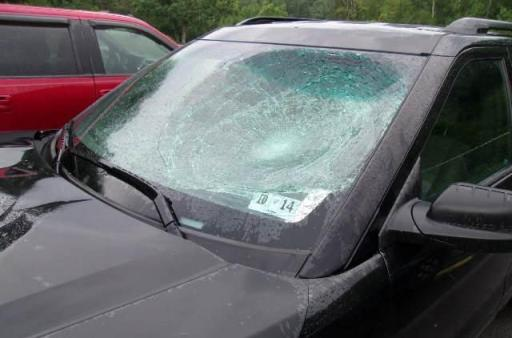 SUV collision with deer damage