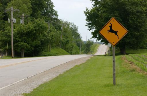 Deer Crossing sign on a rural road