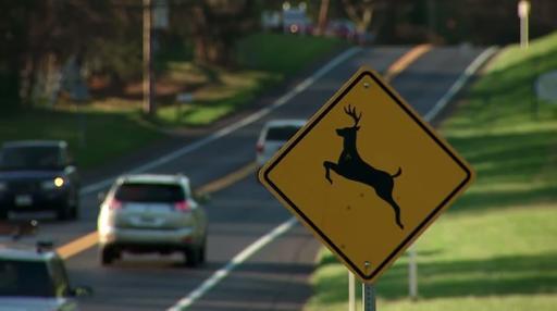 Deer crossing signs and deer near the road