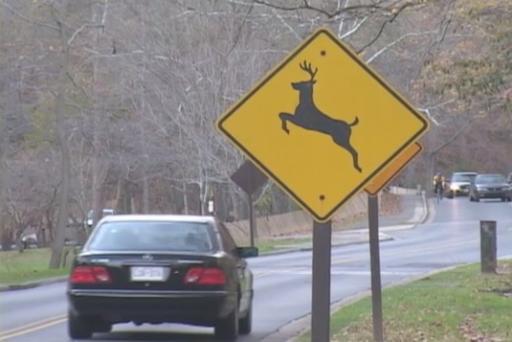 Deer road signs