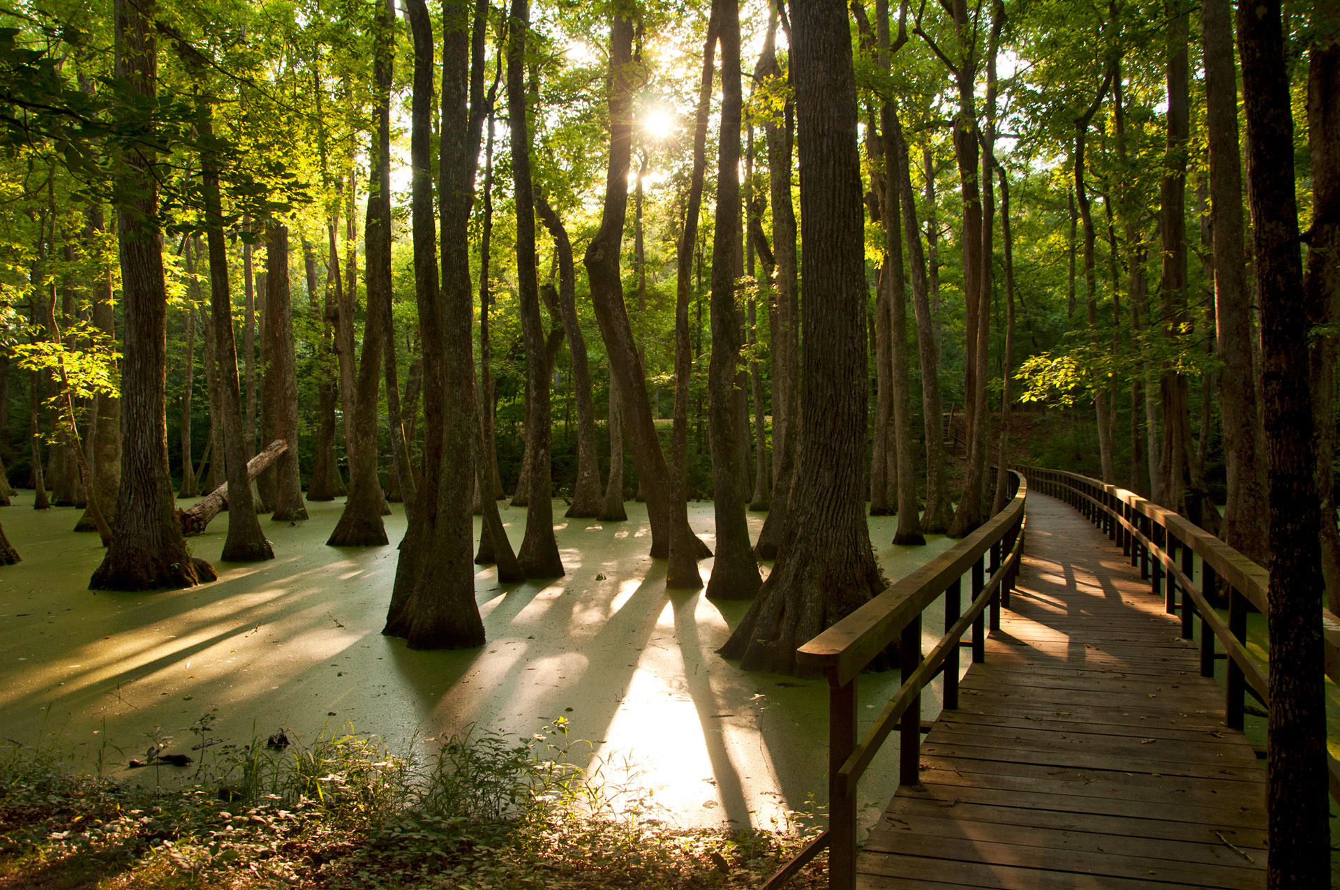 Natchez Trace Parkway, NPS, National Park Foundation Road Trippin' guide
