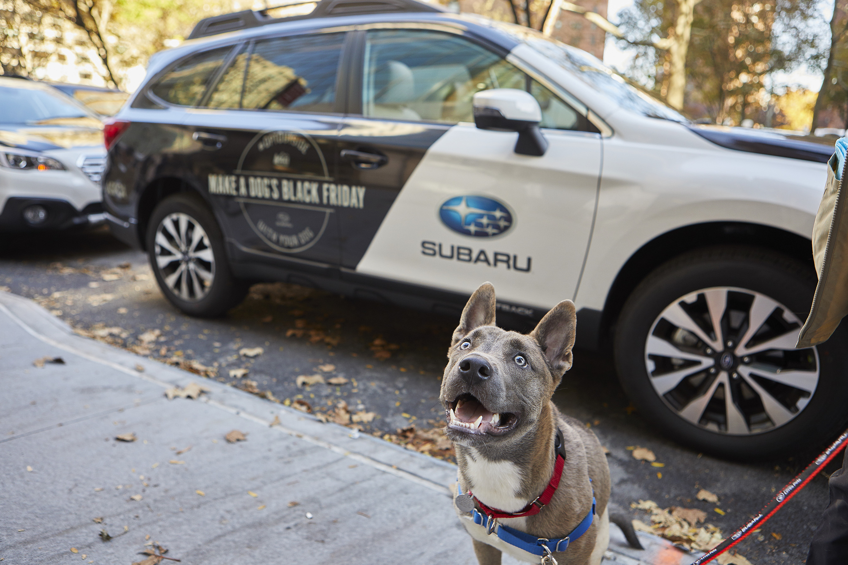 Local NY-based shelter dogs are ready to #OptOutside thanks to Subaru and the ASPCA