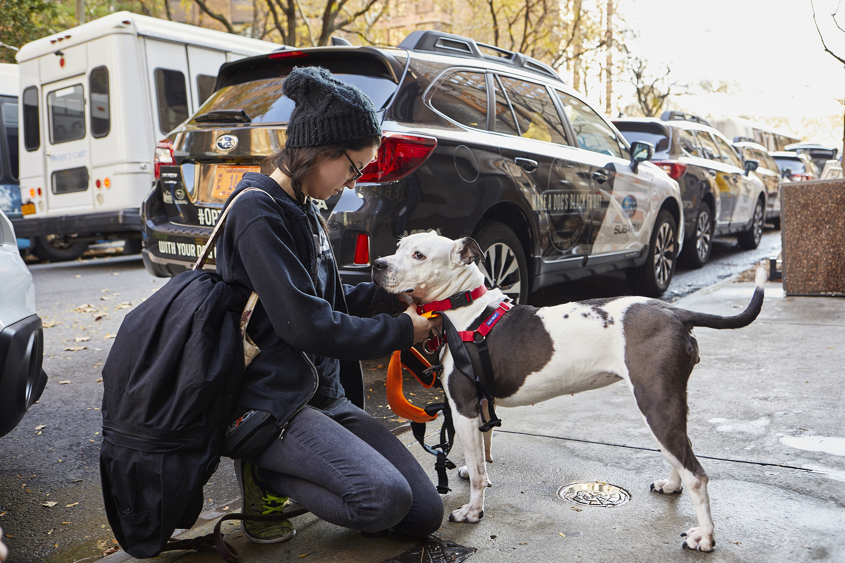 Subaru and the ASPCA prep shelter pets for a day in the great outdoors