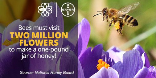 Bees must visit two million flowers to make a one-pound jar of honey!