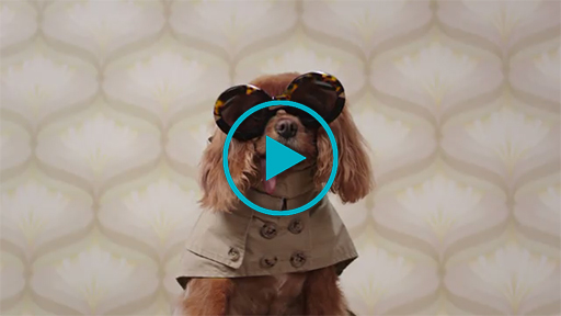 Toast, shelter pet & fashion icon was rescued in 2011 and has 325,000 Instagram followers today.