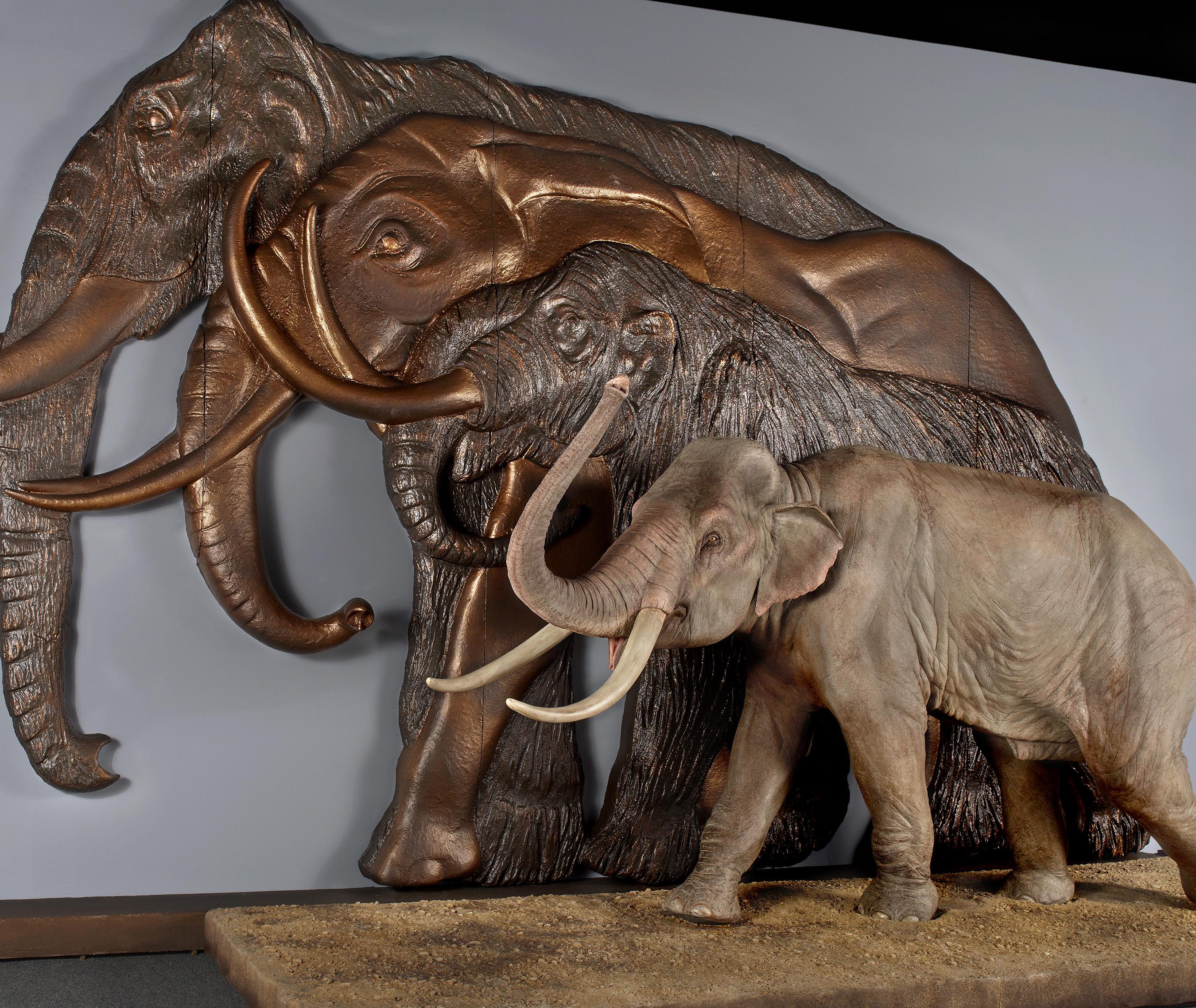 Mammoth matures