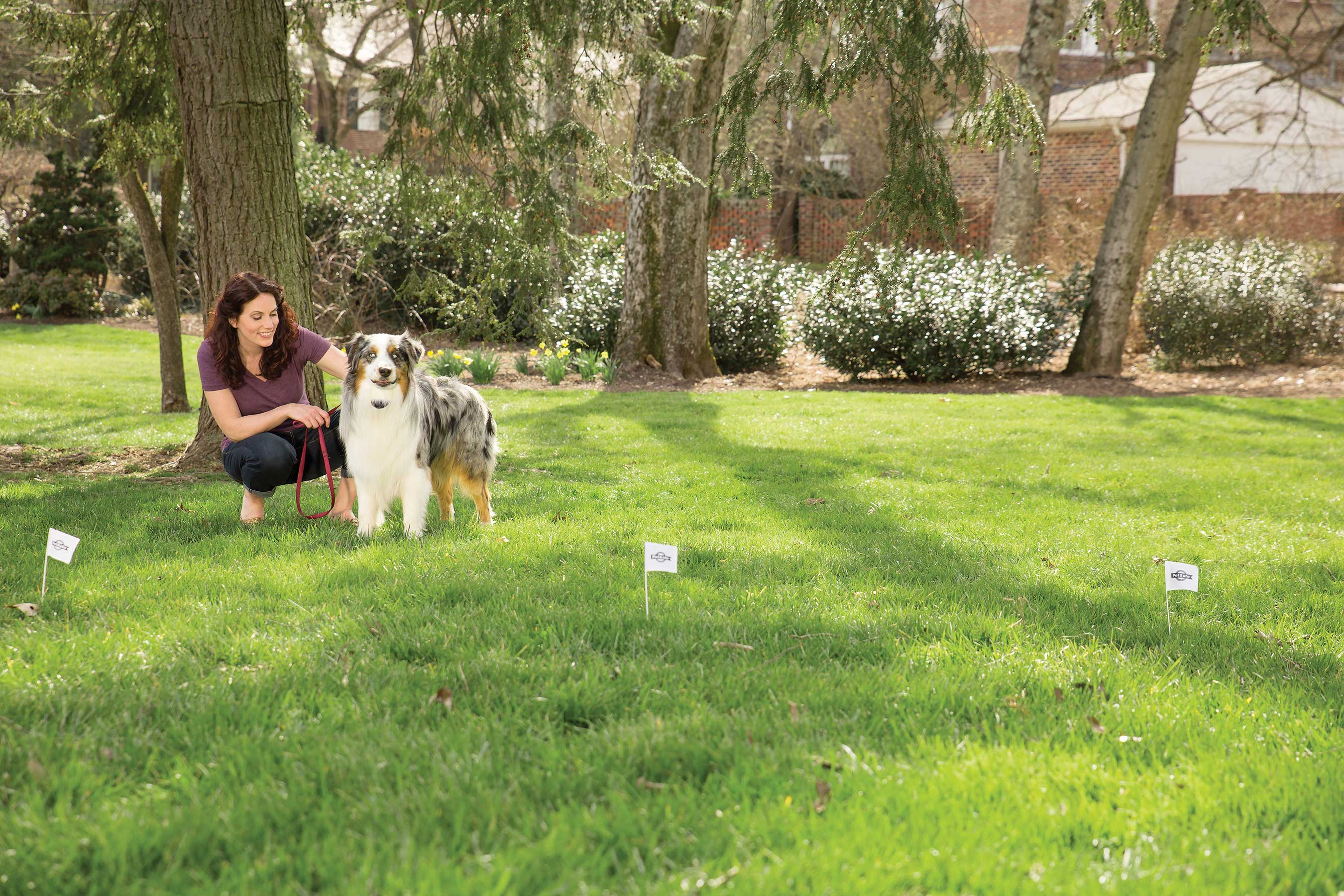 The PetSafe® Free to Roam Wireless Fence™ covers a circular area up to half an acre with no trenches to dig or wires to bury at a fraction of the cost of a traditional fence.