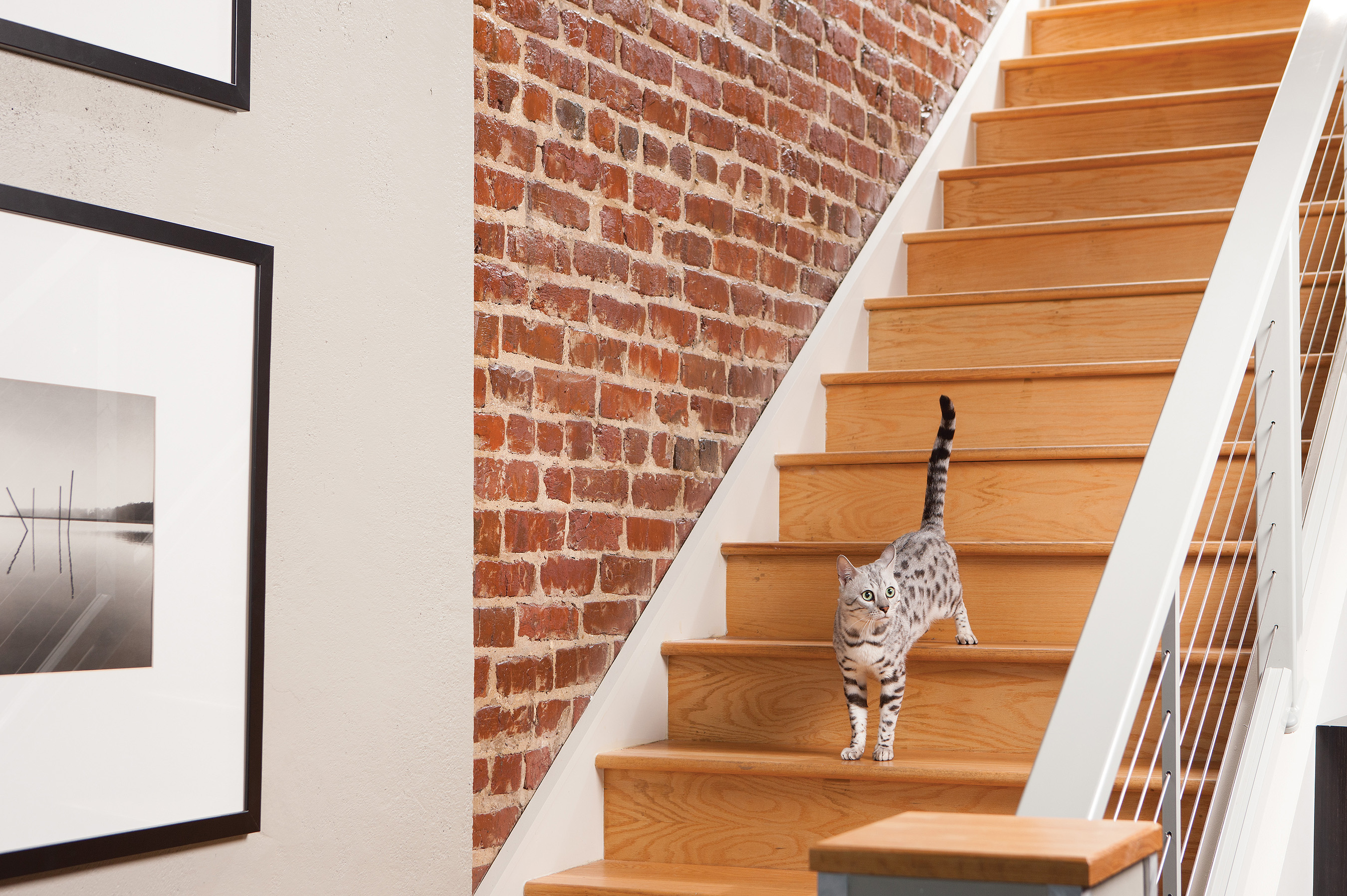 Solutions for Urban Pet Owners